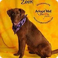 Adopt A Pet :: Zeek - Topeka, KS