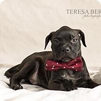 Adopt A Pet :: Rudy - McKinney, TX