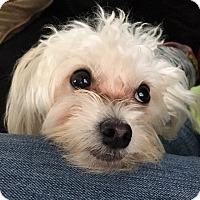 Adopt A Pet :: Jax - Davie, FL