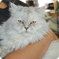 Adopt A Pet :: Dina - Brooklyn, NY