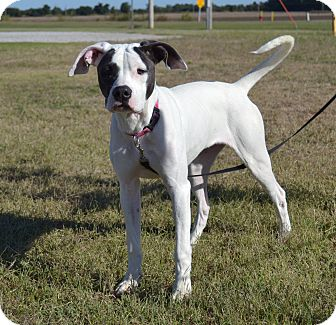 American Pit Bull Terrier Mix Dog for adoption in Larned, Kansas - Doris