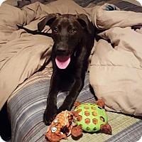 Adopt A Pet :: Lucy 1427 - Alva, OK