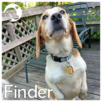 Beagle Dog for adoption in Pittsburgh, Pennsylvania - Finder