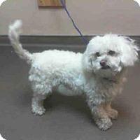 Adopt A Pet :: *EWOK - Las Vegas, NV