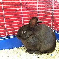 Adopt A Pet :: Cocoa - Elyria, OH