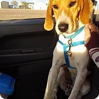 Adopt A Pet :: Chance - Santa Rosa, CA