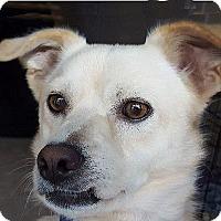 Adopt A Pet :: Vail - Durham, NC