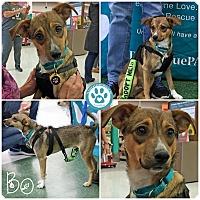 Adopt A Pet :: Bo - Kimberton, PA