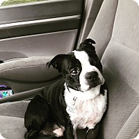 Adopt A Pet :: Beans - Oakley, CA