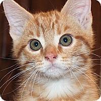Adopt A Pet :: Tate - Irvine, CA