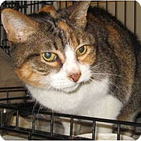 Adopt A Pet :: Janis Joplin - Los Angeles, CA