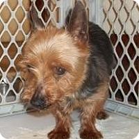 Adopt A Pet :: Tango - North Benton, OH
