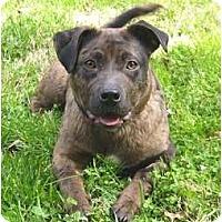 Adopt A Pet :: Sturgis - Mocksville, NC