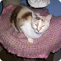 Adopt A Pet :: Kippie - Grand Chain, IL