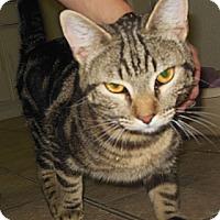Adopt A Pet :: Keegan - Phoenix, AZ