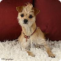Adopt A Pet :: Peanut - Henderson, NV