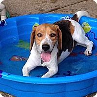 Adopt A Pet :: Danny - Prairieville, LA