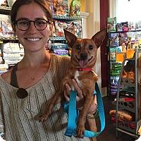 Adopt A Pet :: ZigZag - Nashville, TN