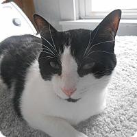 Adopt A Pet :: Timone - Richland, MI