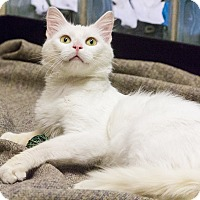 Adopt A Pet :: Ajax - Chicago, IL