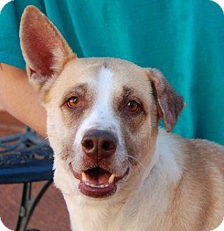 Shepherd (Unknown Type) Mix Dog for adoption in Las Vegas, Nevada - Sandra