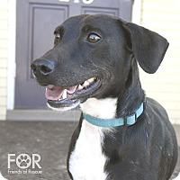 Adopt A Pet :: KC - Knoxville, TN