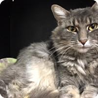 Adopt A Pet :: Fiona - Diamond Springs, CA