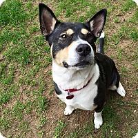 Adopt A Pet :: Josie - Bristol, CT