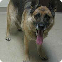 Adopt A Pet :: Laddy - Gary, IN