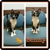 Adopt A Pet :: Benny - Steger, IL