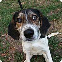 Adopt A Pet :: firecraker - Marion, IN