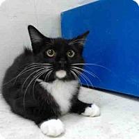 Adopt A Pet :: SNEAKERS - Orlando, FL