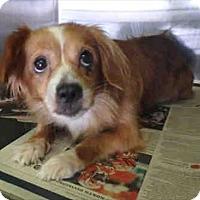 Adopt A Pet :: Evie - Encino, CA