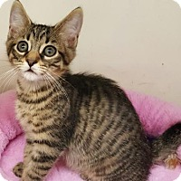 Adopt A Pet :: Bodhi - Walworth, NY