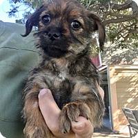 Adopt A Pet :: Mouse - Temecula, CA