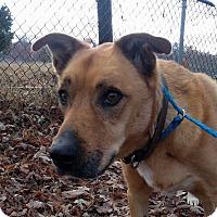 Adopt A Pet :: Zoe **FOSTER NEEDED** - New York, NY