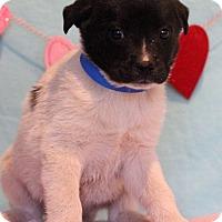 Adopt A Pet :: Marco - Waldorf, MD