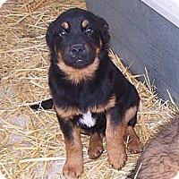 Adopt A Pet :: Sarge - Chewelah, WA