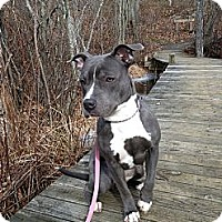 Adopt A Pet :: Princess SAMANTHA <3<3 KIDS - Durham, NH
