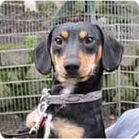 Adopt A Pet :: PAXTON - Portland, OR