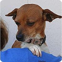 Adopt A Pet :: Dulce - Santa Barbara, CA