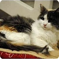 Adopt A Pet :: Patches - Palmdale, CA