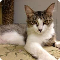 Adopt A Pet :: Leona - Fort Lauderdale, FL