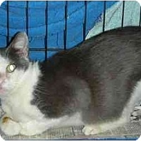 Adopt A Pet :: Jackie Blue - Fort Lauderdale, FL