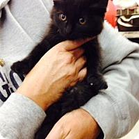 Adopt A Pet :: Pria - Troy, OH