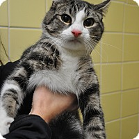 Adopt A Pet :: Cody - Rockaway, NJ