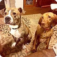 Adopt A Pet :: Buddy - Wauwatosa, WI