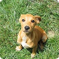 Adopt A Pet :: Guenevere - Middletown, RI