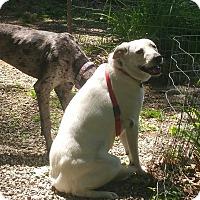 Adopt A Pet :: Rosie - Ascutney, VT