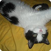 Adopt A Pet :: Bentley- ADOPTION PENDING! - Arlington, VA